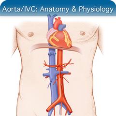 Онлайн-курс ультразвукового исследования аорты / НПВ: модуль анатомии и физиологии