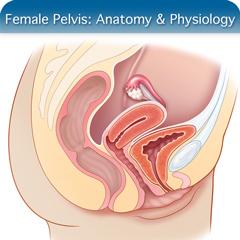 Онлайн-курс ультразвукового исследования женского таза: модуль анатомии и физиологии