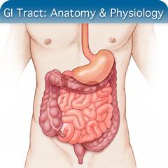 Online-Ultraschallkurs für GI-Trakt: Anatomie & Physiologie-Modul