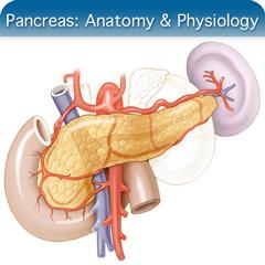 Corso online di ecografia per il pancreas: modulo di anatomia e fisiologia