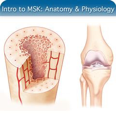 Corso online di ecografia per introduzione a MSK: modulo di anatomia e fisiologia