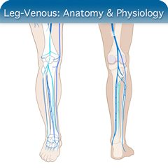 Online Ultrasound Course for Leg-Venous: Anatomy & Physiology Module