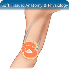 Онлайн-курс ультразвукового исследования мягких тканей: модуль анатомии и физиологии