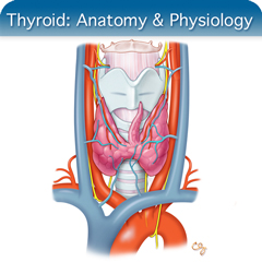Online Ultrasound Course for Thyroid: Anatomy & Physiology Module