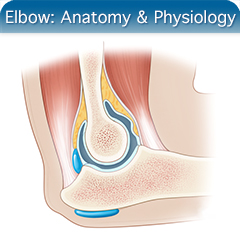 Online Ultrasound Course for Elbow: Anatomy & Physiology Module
