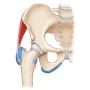 Corso di ecografia dell'anca