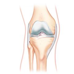 Ginocchio: modulo Anatomia e Fisiologia