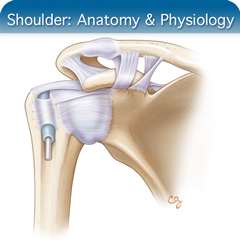 Online Ultrasound Course for Shoulder: Anatomy & Physiology Module