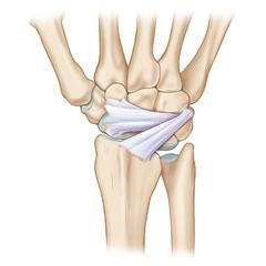 Polso: modulo Anatomia e Fisiologia
