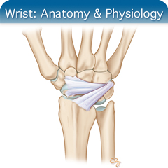 Corso di ecografia online per il polso: modulo di anatomia e fisiologia
