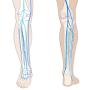 Corso di ecografia venosa della gamba