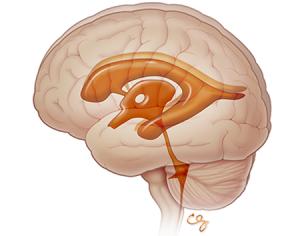 Neonatal & Infant Neurosonography