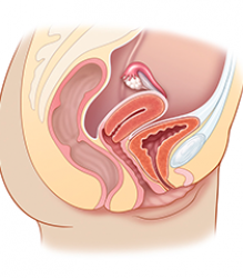 Female Pelvis: Anatomy & Physiology Module